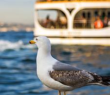 Organisez votre voyage en ferry